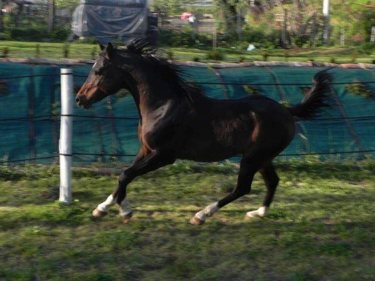 avatar-stallone-arabo2