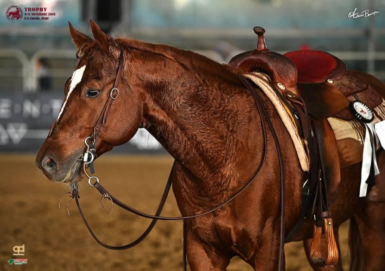 steppin-out-wrangler-stallone-sauro-reining-italia-1-reining