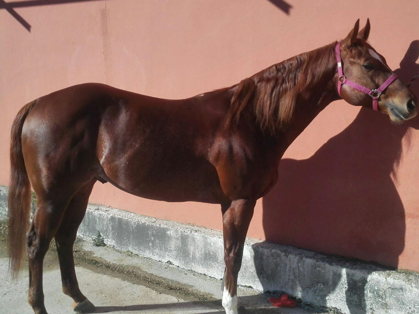 steppin-out-wrangler-stallone-sauro-reining-italia-2
