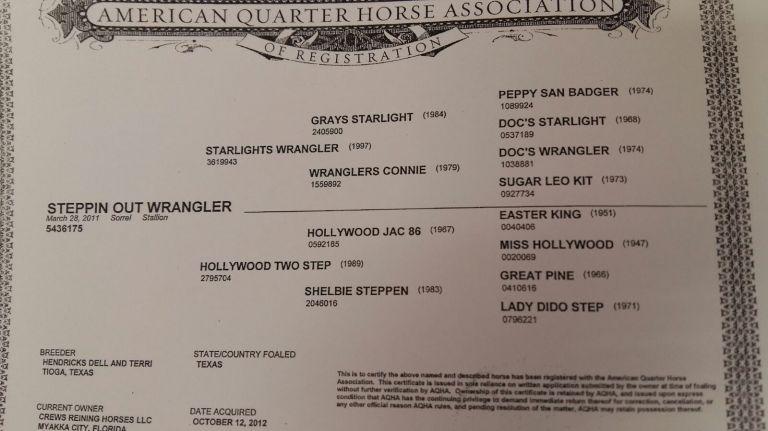 steppin-out-wrangler-stallone-sauro-reining-italia-certificato