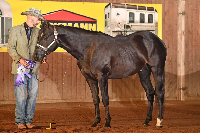 mr-dark-little-step-quarter-horse-stallion