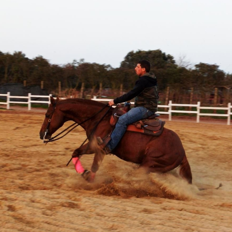 Stallone Quarter Horse STEPPIN OUT WRANGLER 2011 Reining Stallion at stud In Riproduzione