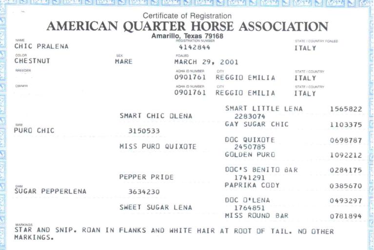 CHIC PRALENA certificato AQHA