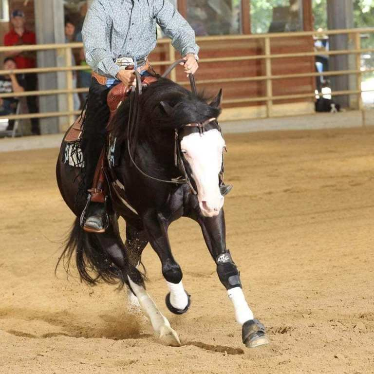 BALCK GOTTA GUN AMERICAN QUARTER HORSE STALLION AT STUD 4