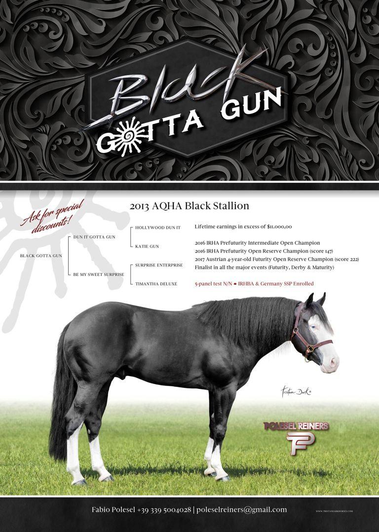 BALCK GOTTA GUN AMERICAN QUARTER HORSE STALLION AT STUD 7
