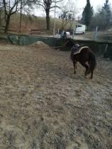 PENNY WHIZ N SNAP CAVALLO QUARTER HORSE FEMMINA IN VENDITA 3