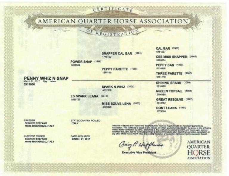 penny-whiz-n-snap-cavallo-quarter-horse-femmina-in-vendita-certificato.jpg