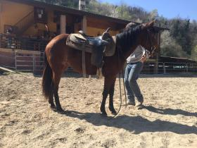 PENNY WHIZ N SNAP CAVALLO QUARTER HORSE FEMMINA IN VENDITA futurity prospect